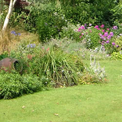 Re-designing your garden's planting areas